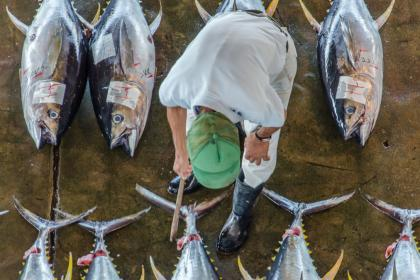 How to craft a strong WTO deal on fishing subsidies