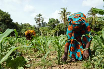 African women work in a maize field