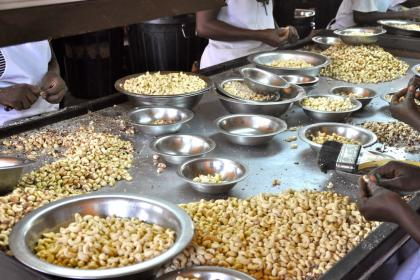 Cashing in on cashews: Africa must add value to its nuts