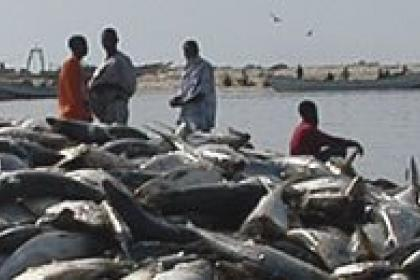 Fish-rich Mauritania looks to its Nouadhibou port for a brighter future