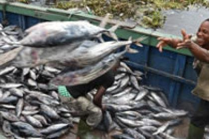 Experts look beyond WTO setback as time runs out to roll back harmful fishing subsidies