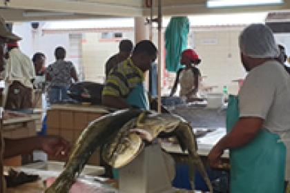 Barbados bets on high-value seafood for blue future