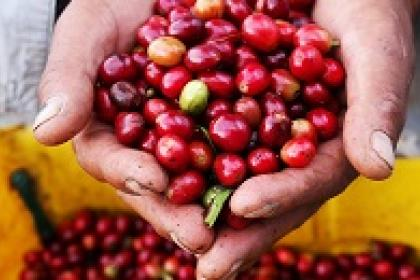 Fair trade enterprises spread benefits through value chains