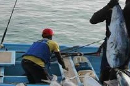 UNCTAD fisheries project facilitates south-south partnerships