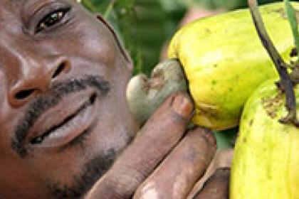 "Senegal set to boost ""green"" exports of cashews and mangoes"